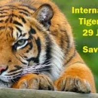 International Tiger Day on 29th July