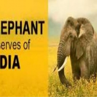 Surakshya portal launched for human-elephant conflict